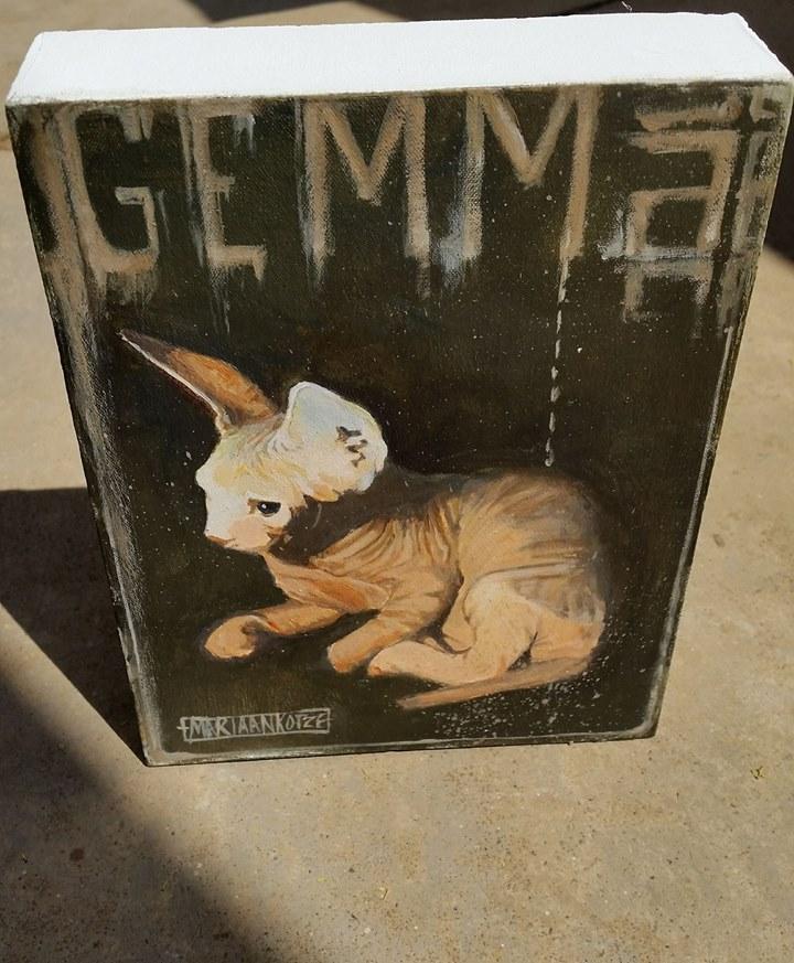 Gemma the Sphynx Cat