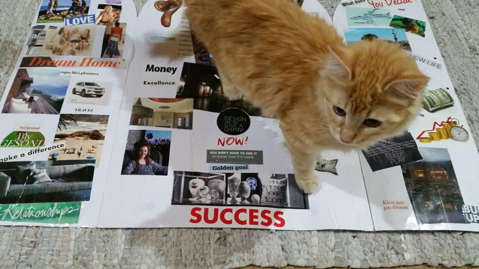 Ginger Cat and my Vision Board
